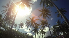 Sun Rays Through Palm Trees Stock Footage
