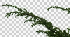 Fir-Tree Bush Plants Grass Branches Stock Footage