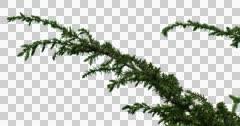 Fir-Tree Bush Plants Grass Branches Stock Footage