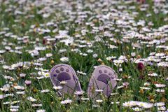 Little shoes on flowery meadow - stock photo