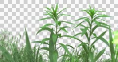 Green Bush Plants Flowers Grass Branches Stock Footage