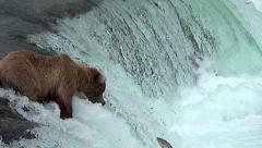 Bear on Falls Tries to Catch Jumping Salmon But Misses Two- 50% Slow Motion Stock Footage
