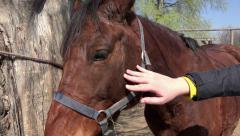 4k Horse caresses closeup. UHD steadycam stock video Stock Footage