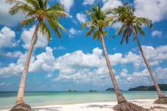 Coconut tree and beach timelapse - stock footage