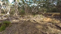 Aerial view of gumtrees Stock Footage
