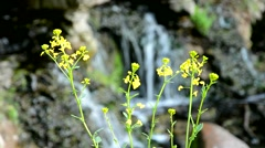 Wild waterfall in refocuse, amid a forest of flowers. Stock Footage