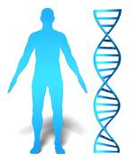 Human gene research concept of a man's silhouette and a DNA spiral - stock illustration