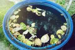Blue water tank with fallen leaves in the garden Stock Photos