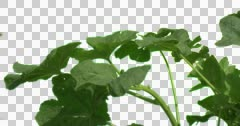 Burdock Plant Grass Green Branches Leaves Stock Footage
