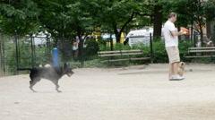 Black dog running tennis ball through smoke sand cloud slow motion 4K NYC Stock Footage