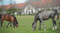 Young Horses Graze on the Farm Ranch Stock Footage