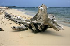beach and tree in  republica dominicana - stock photo