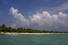 ocean coastline  palm and tree in dominicana - stock photo