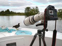 Time for your close up Miss Moorhen Stock Photos