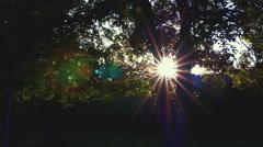 Summer Nature Forest Landscape sun between trees - beauty art Stock Footage
