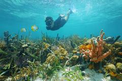 Man snorkeling underwater looks reef fish Kuvituskuvat