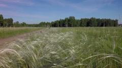 Stipa grass. West Siberian Plain Stock Footage