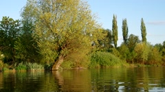 Willow on the bank of the lake Stock Footage