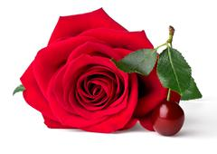 Velvet red rose and cherry Stock Photos