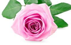 Pink rose bud - stock photo
