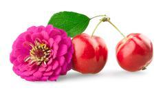Chrysanthemum and mini apples Stock Photos