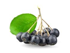 Black aronia with leaf - stock photo