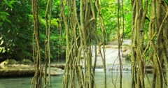 Foliage and Liana vines hanging form forest canopy near water stream in jungle Stock Footage
