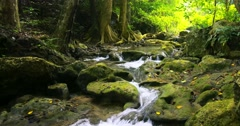 Tracking dolly shot of beautiful nature in dense forest lush. Mountain creek - stock footage