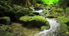 Stones and rocks covered by moss along water stream flowing through green forest Stock Footage