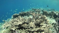 Vibrant Coral Reef Stock Footage