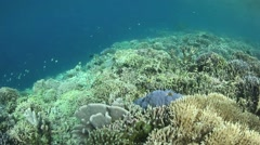Healthy Coral Reef in Pacific Stock Footage