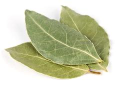 Aromatic bay leaves Stock Photos