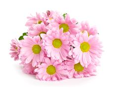 Beautiful bouquet of bright pink flowers Stock Photos