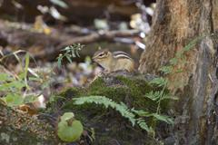 The funny cute little chipmunk Stock Photos