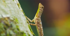 Lizard on tree trunk hunting for ants in jungle rain forest  Stock Footage