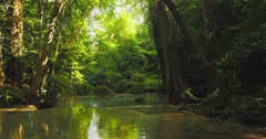 Slider video shot of river in forest  - stock footage