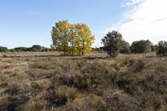 Among Holm Oaks Autumn - stock photo