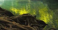Close up view of old twisted tree roots on riverside bank with small ripples Stock Footage