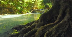 Big rough and curved roots of old big tree near creek running through jungle Stock Footage