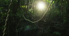 Dense jungle forest background. Liana vines and tropical trees under canopy Stock Footage