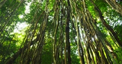 Jungle nature environment. Dolly video of scenic wild flora in rainforest Stock Footage