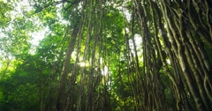 Sun light shines through rain forest canopy. Tracking video Stock Footage