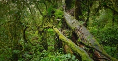 Zoom in dolly shot of amazing deep forest with old trees covered by moss Stock Footage