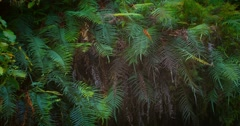 Dense jungle forest. Natural wall of ferns leaves and tropical plants moving Stock Footage