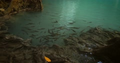 School of fish in clean water of natural pond in tropical rainforest of Thailand - stock footage