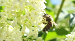 Bee Extracts Pollen Stock Footage