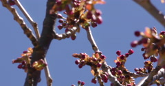 4K, Pink and white Spring blossom on the trees and flowers Stock Footage