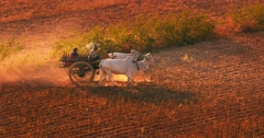 Rural scene in Myanmar (Burma). Peasants on field - stock footage