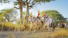 Tourists and local Burmese peasants on decorated bull cart making sunset trip Stock Footage
