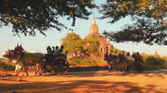 Tourists on bulock cart in Bagan Myanmar (Burma) slow motion video Stock Footage